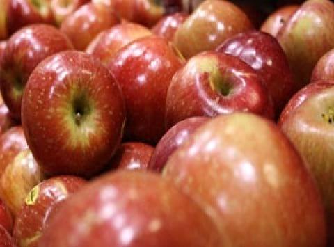 ناگفتههای واکس میوه