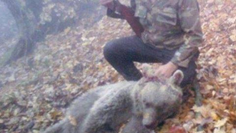 عکس گوشی تلفن همراه، شکارچی خرس قهوه ای را لو داد