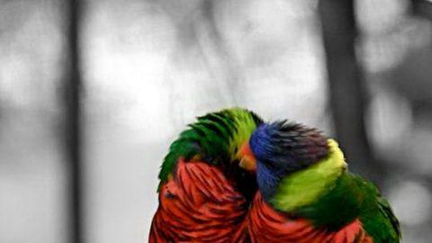 رنگ انتخابی در عکس