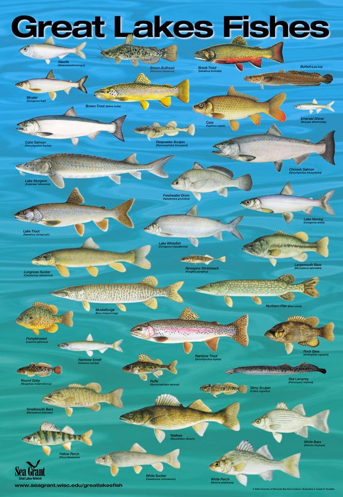 سیری در دنیای ماهی ها