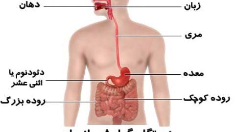 اطلاعات عمومی بدن ما بخش ۳ (دستگاه گوارش)