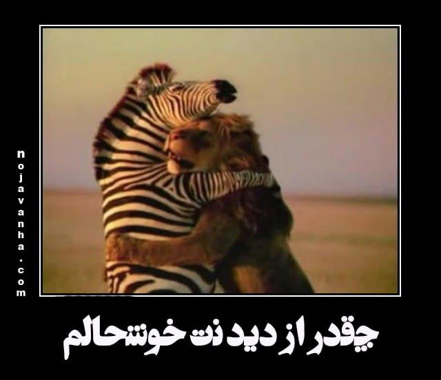 laugh-nojavanha (1)