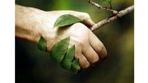 چگونه می توانیم یار طبیعت باشیم؟