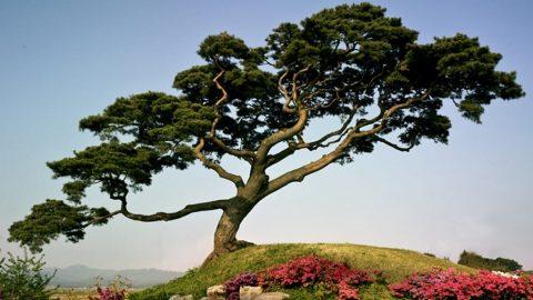 در مورد تکامل درخت بدانیم