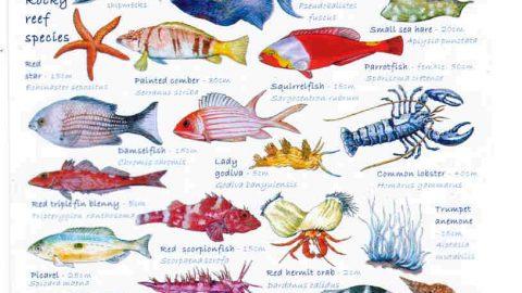 تکامل و طبقه بندی ماهی