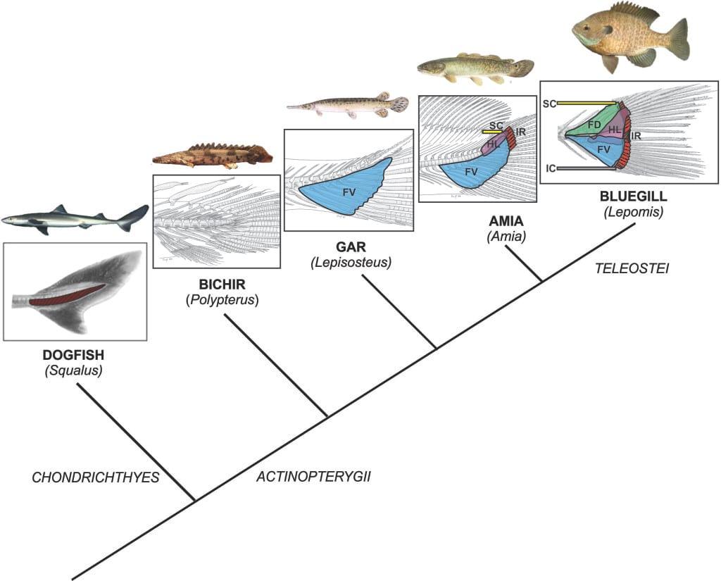آشنایی با ماهی ها