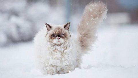 برف و هیجان حیوانات