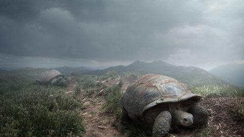 عکس های فراواقعیتی (۱) کوچ حیوانات از زمین