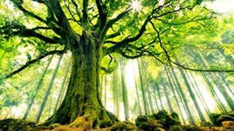 نکاتی درباره طبقه بندی درختان