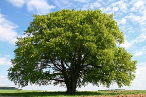 با ساختار درخت آشنا شوید