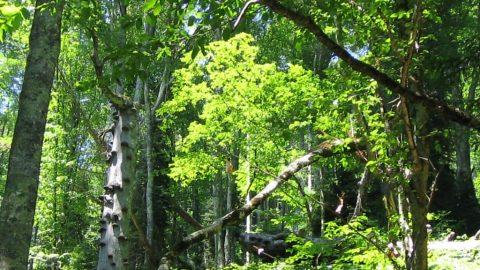 جنگل درختان برگ پهن منطقه معتدل