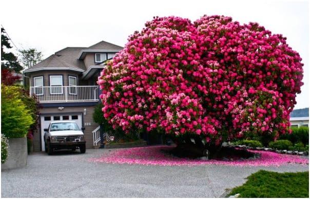 درختان زیبای جهان