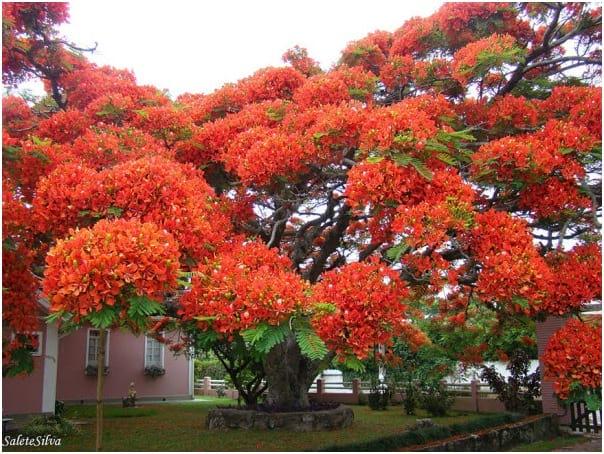 درختان زیبا (10)