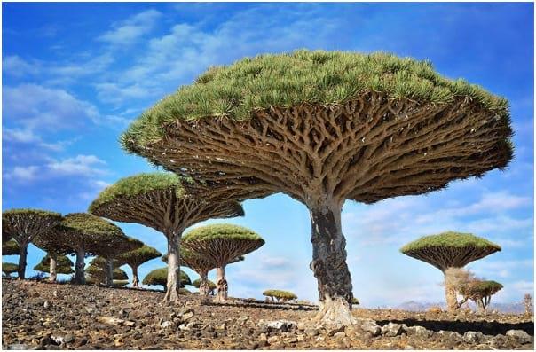 درختان زیبا (11)