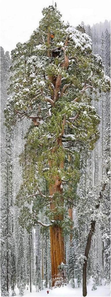 درختان زیبا (12)