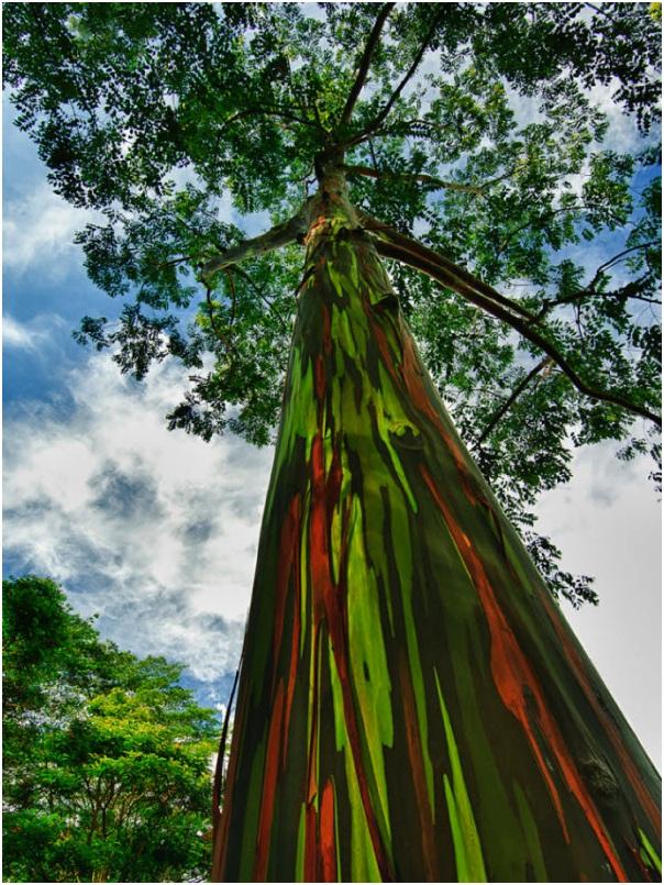 درختان زیبا (15)