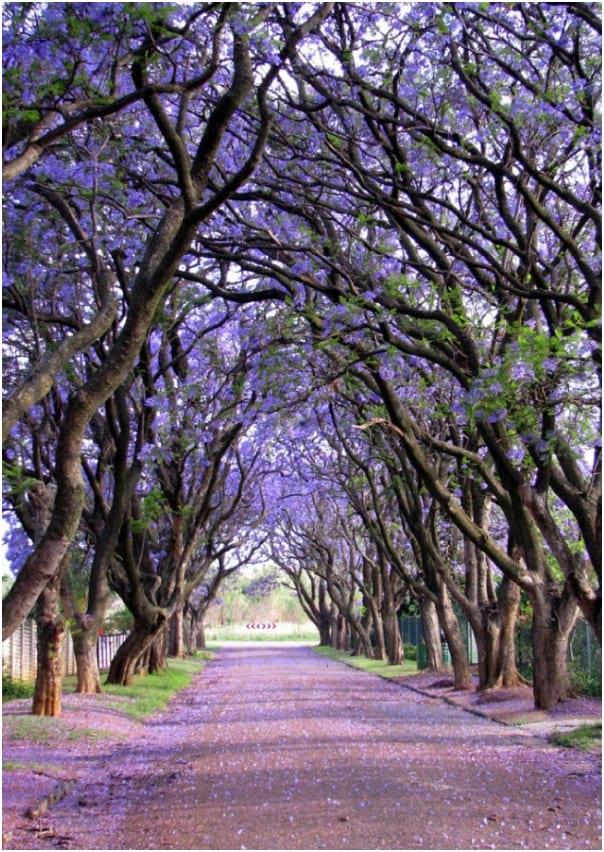 درختان زیبا (16)