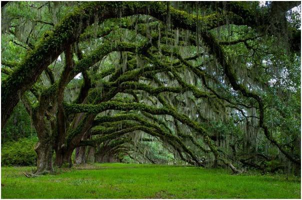 درختان زیبا (17)