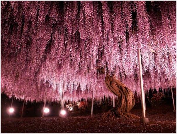 درختان زیبا (2)
