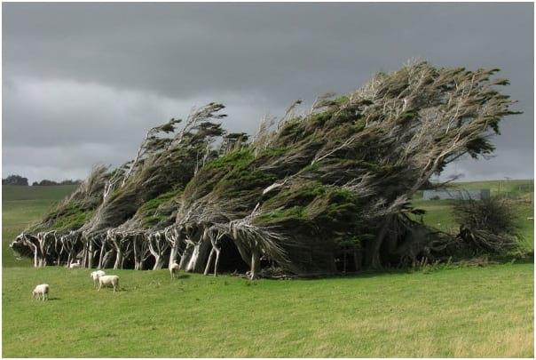 درختان زیبا (4)