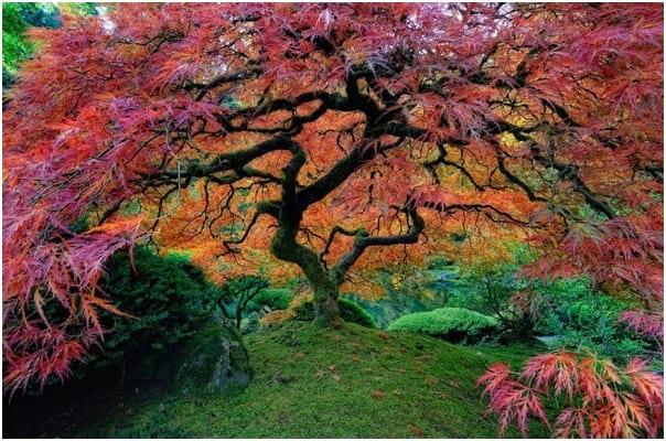 درختان زیبا (6)