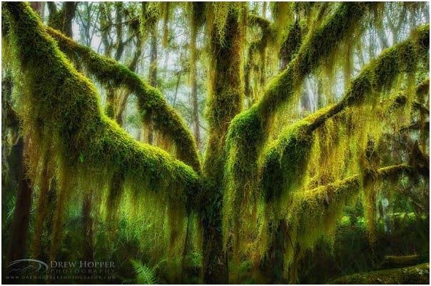 درختان زیبا (7)