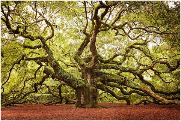 درختان زیبا (9)