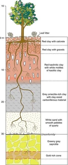 درخت چگونه کار می کند؟