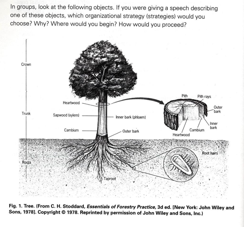 ساختار درخت