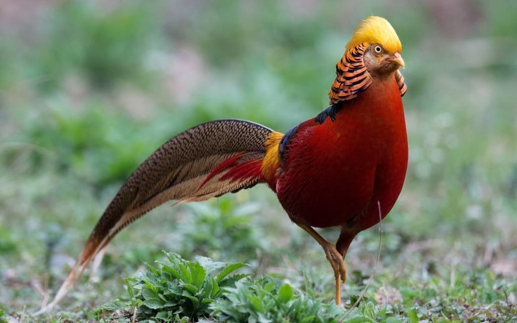 تصاویر پرندگان زیبا برای پس زمینه تلفن همراه و تبلت