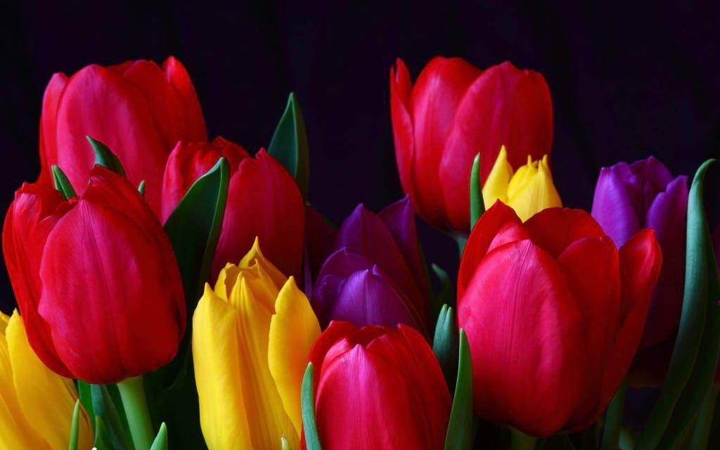 بهار (2)