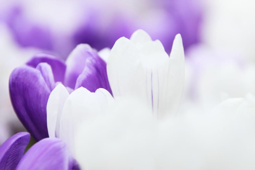 بهار (3)