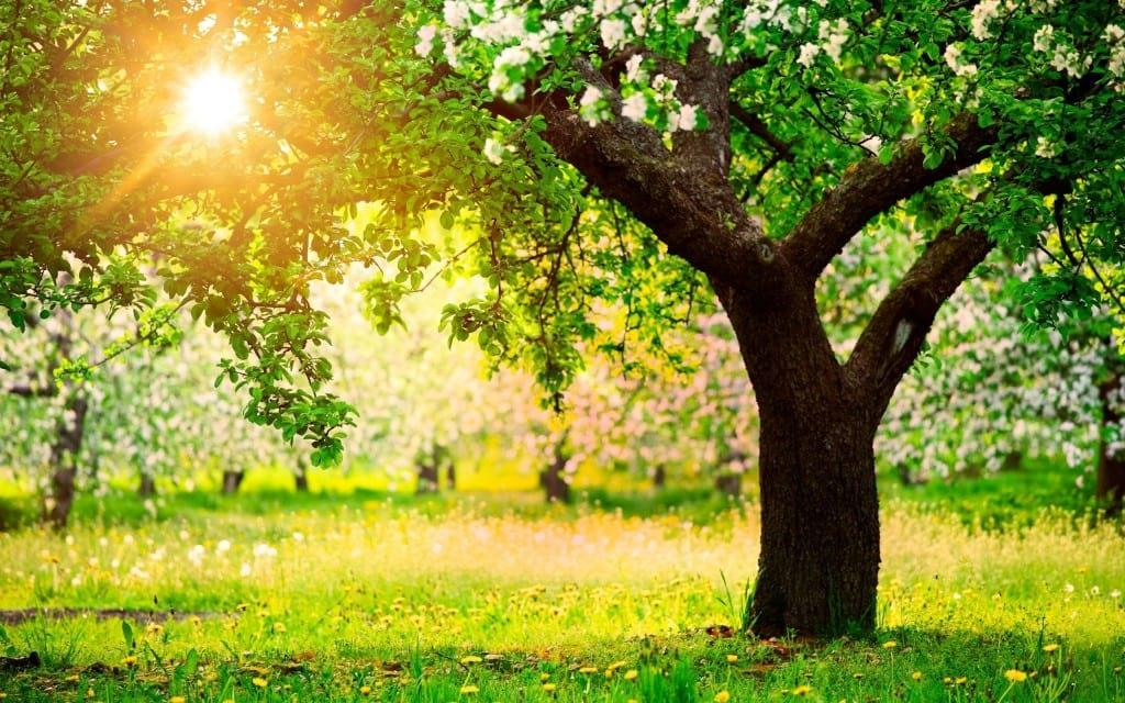 بهار (4)