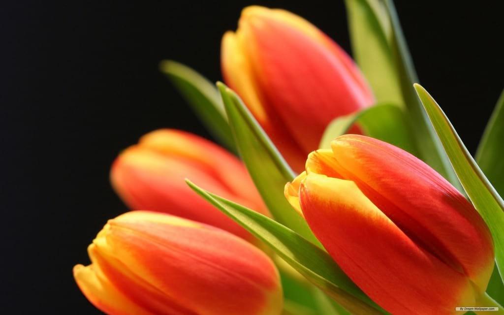 بهار (8)