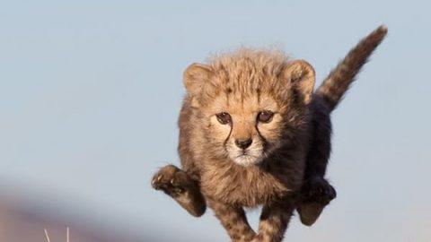 عکس های دوست داشتنی از بچه های حیوانات