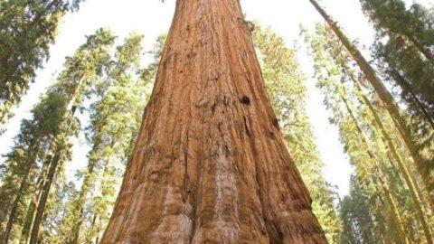 زندگی با درختان باستانی