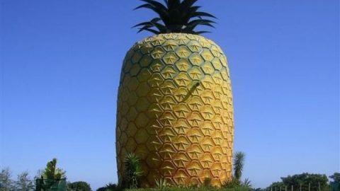 ساختمان های میوه ای
