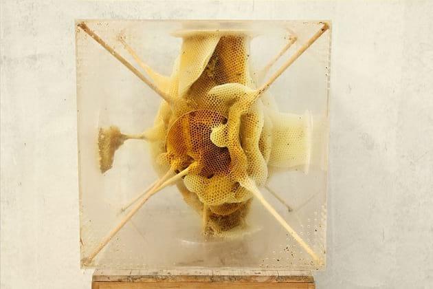 زنبور عسل (1)