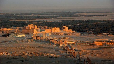 عروس صحرا در آستانه نابودی