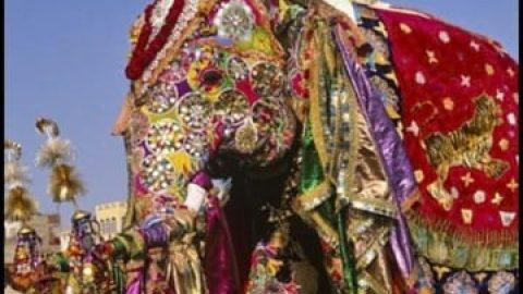 جشنواره فیل های رنگی