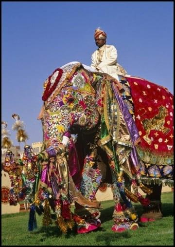 جشنواره فیل های رنگی (1)