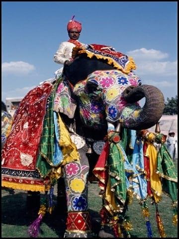 جشنواره فیل های رنگی (12)