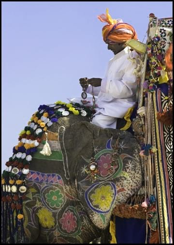 جشنواره فیل های رنگی (13)