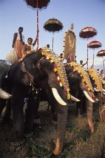 جشنواره فیل های رنگی (14)