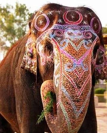 جشنواره فیل های رنگی (16)