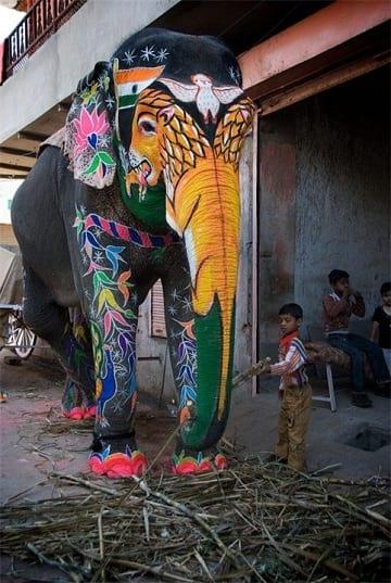 جشنواره فیل های رنگی (18)