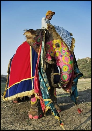 جشنواره فیل های رنگی (3)