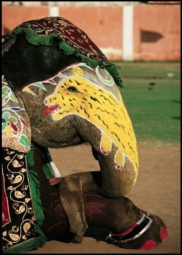 جشنواره فیل های رنگی (4)
