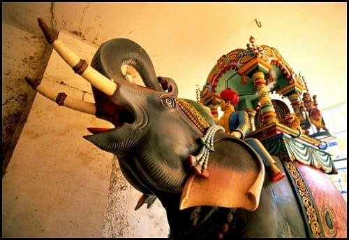 جشنواره فیل های رنگی (8)