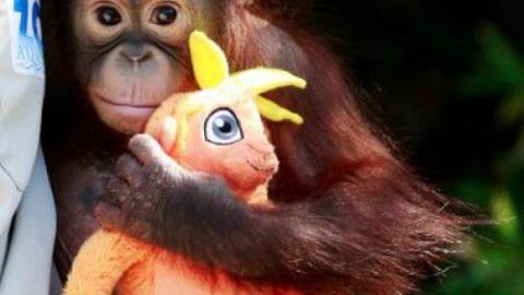 نگاهی به بعضی حیوانات جهان (۱)